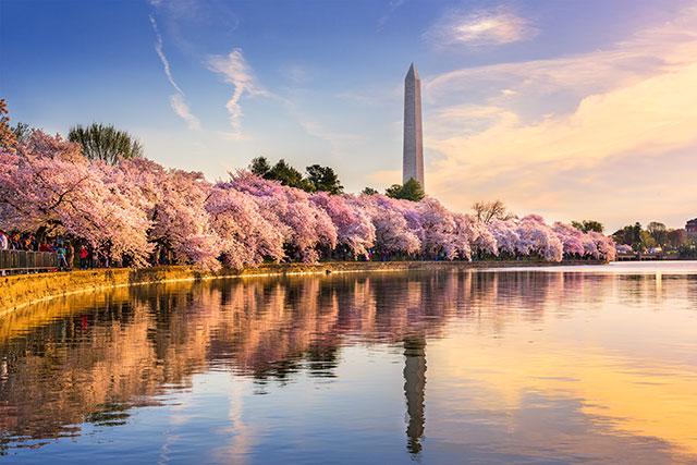 Cherry Blossoms, The Big Apple & Bahamas