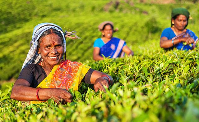 Journey through Sri Lanka and Beyond