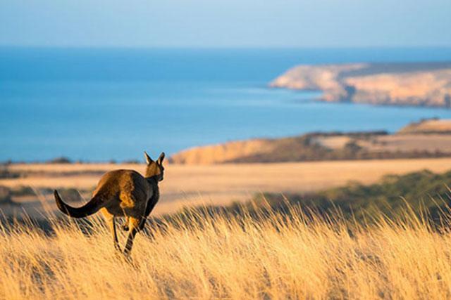 Kangaroo Island, The Ghan & The Red Centre