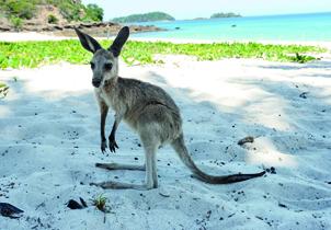 Exploring Australia's East Coast Islands