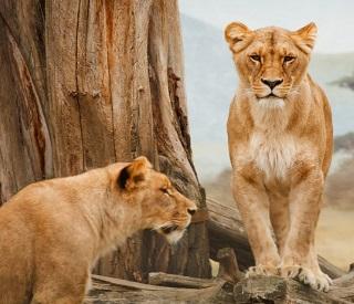 CRUISETOUR: South Georgia & The Big five Safari
