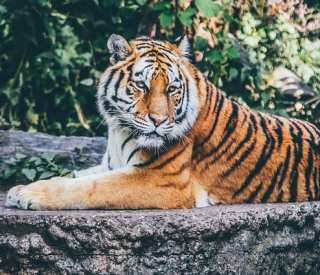 Southeast Asia & Land of the White Tiger
