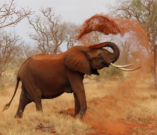 CRUISE TOUR: Marina Bay to Africa, Kruger & Victoria Falls