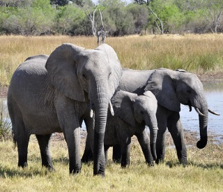 Africa's Big Five & the Queen Elizabeth
