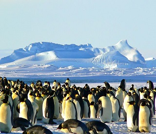 Captivating Antarctica & Patagonia
