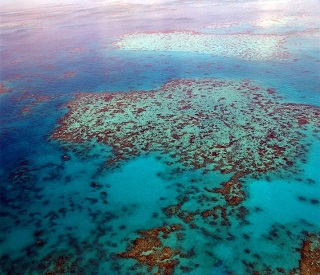 Enjoy the Wonder of the Great Barrier Reef