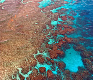 Great Barrier Reef Cruise