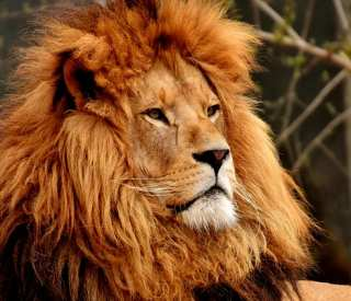 CRUISETOUR: African Safari Search for the Big 5!