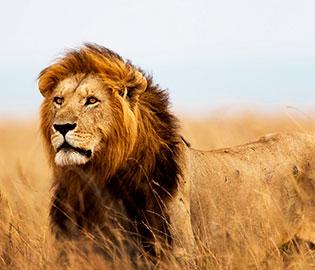 CRUISE TOUR: Across the Indian Ocean & Africa Safari
