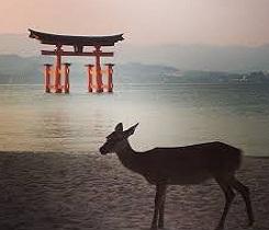 Shrines, Kimonos & Far East Discovery