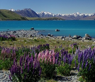 Spectacular Fjords and Beauty of New Zealand