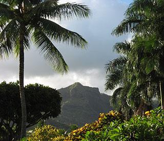 Quantum to Hawaii