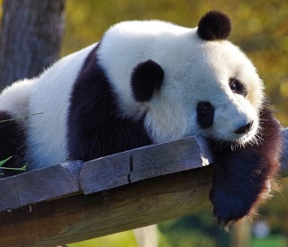 CRUISETOUR: Giant Pandas and the Great Wall