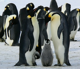 CRUISE TOUR: Antarctica & Patagonian Icons