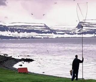 Alaska Fjords Odyssey