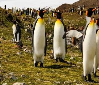 Celebrate Antarctica, Patagonia & South Georgia