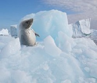 Enthralling Antarctic