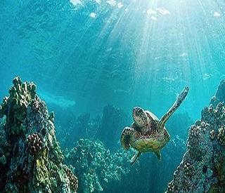 Captivating Caribbean